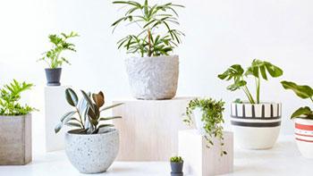 معرفی گیاهان مناسب دکوراسیون داخلی - مبلمان اداری
